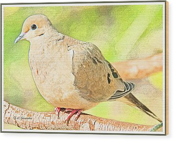 Mourning Dove Animal Portrait Wood Print by A Gurmankin