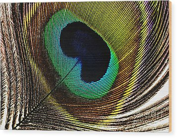 Peacock Feathers Wood Print by Mary Van de Ven - Printscapes