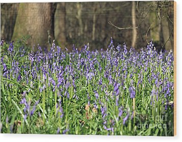 Bluebells At Banstead Wood Surrey Uk Wood Print