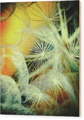 Dandelions Wood Print by Iris Greenwell