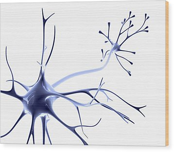 Nerve Cell Wood Print by Pasieka