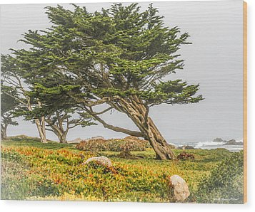 #7803 - Monterey, California Wood Print