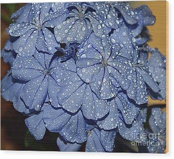 Blue Plumbago Wood Print by Elvira Ladocki