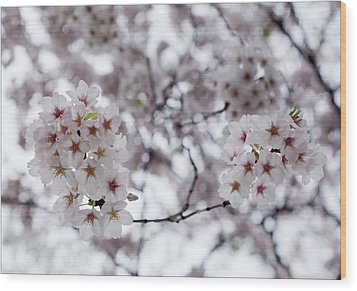 Cherry Blossoms Wood Print by Robert Ullmann