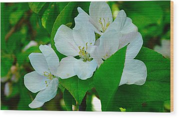 Wood Print featuring the painting Apple Blossoms by Johanna Bruwer