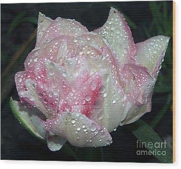 Nice Tulip Wood Print by Elvira Ladocki