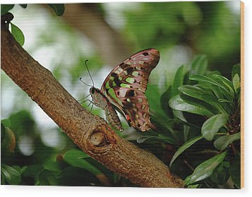 Tailed Jay Wood Print