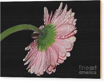 Pink Gerber Wood Print by Elvira Ladocki