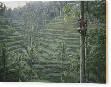 A Bahasa, Or Coconut Tree Climber Wood Print by Justin Guariglia