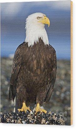 A Bald Eagle Wood Print by John Hyde - Printscapes