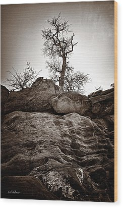 A Barren Perch - Sepia Wood Print by Christopher Holmes