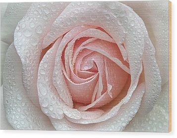 A Beautiful Blush Wood Print