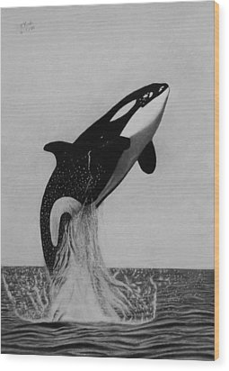 Orca - The Joy Of Freedom Wood Print