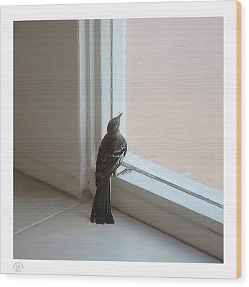 A Bird At A Plate Glass Window Wood Print by Stan  Magnan