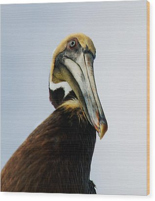 Wood Print featuring the photograph A Bird's Eye View by Kathleen Stephens