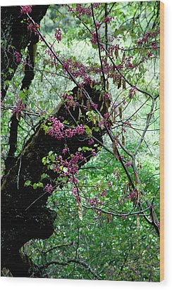 A Bit Of Color Wood Print by Brigid Nelson