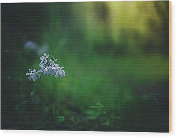 Wood Print featuring the photograph A Bit Of Forest Magic by Shane Holsclaw
