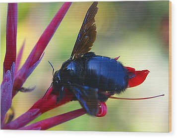 Wood Print featuring the photograph A Bluebee by DiDi Higginbotham