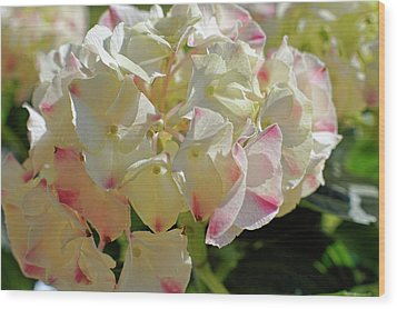 Wood Print featuring the photograph A Blush Of Pink by Cricket Hackmann
