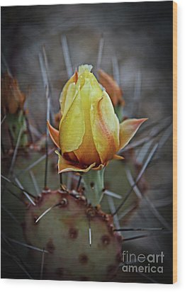 Wood Print featuring the photograph A Bud In The Thorns by Robert Bales