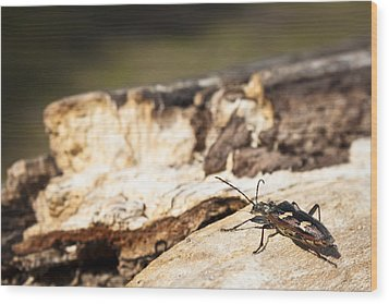 Wood Print featuring the photograph A Bugs Life by Stewart Scott