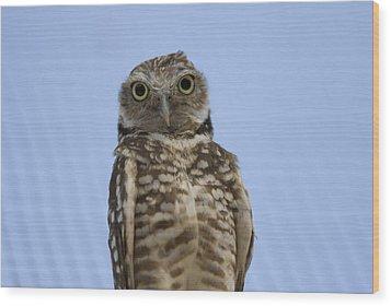 A Burrowing Owl Athene Cunicularia Wood Print by Joel Sartore