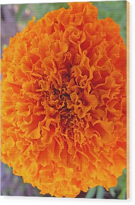 A Burst Of Orange Wood Print