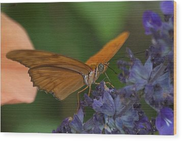 A Butterfly Sipping Nectar 1 Wood Print by Susan Heller