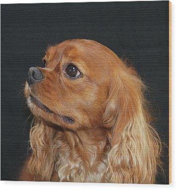 A Caramel Look Wood Print by Daphne Sampson