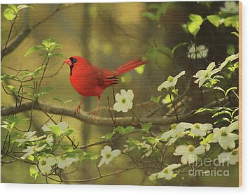 Wood Print featuring the photograph A Cardinal And His Dogwood by Darren Fisher