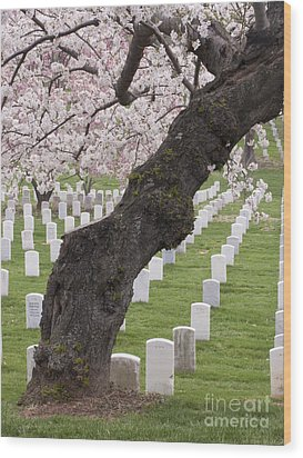 A Cherry Tree In Arlington National Cemetery Wood Print by Tim Grams