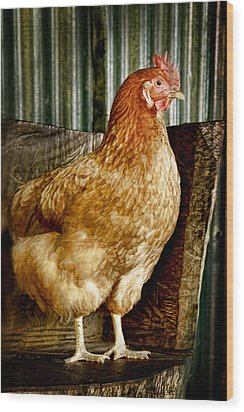 A Chicken Named Rembrandt Wood Print
