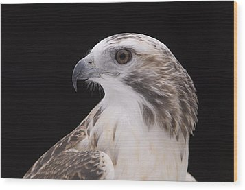 A Close-up Of A Kriders Red-tailed Wood Print by Joel Sartore