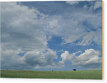A Cloud-filled Sky Over Pronghorns Wood Print by Annie Griffiths