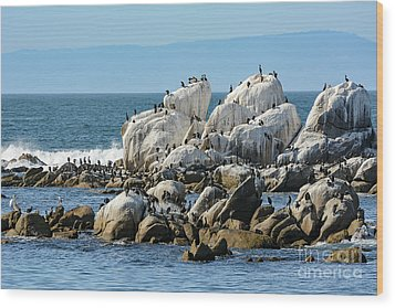 Wood Print featuring the photograph A Crowded Bird Rock by Susan Wiedmann