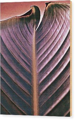 A Cut Above Wood Print by Gwyn Newcombe