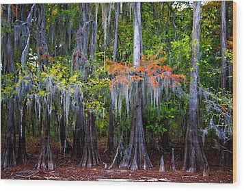 Wood Print featuring the digital art A Cypress Fall by Lana Trussell