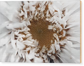 A Daisy Wood Print by Bransen Devey