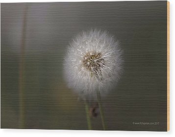 Wood Print featuring the photograph A Dandelion by Lora Lee Chapman