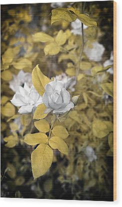 A Day In The Garden Wood Print by Paul Seymour