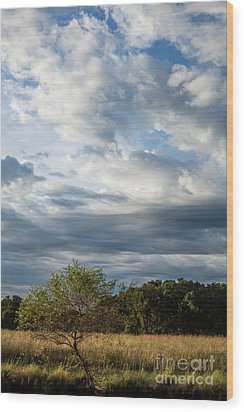 Wood Print featuring the photograph A Day In The Prairie by Iris Greenwell