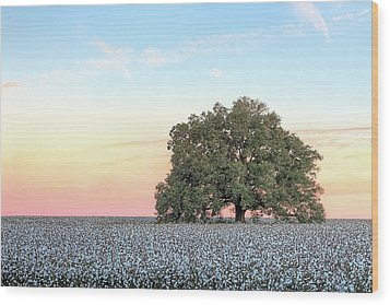 A Deeply Southern Sunrise Wood Print by JC Findley