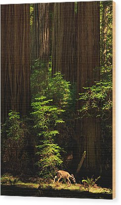 A Deer In The Redwoods Wood Print