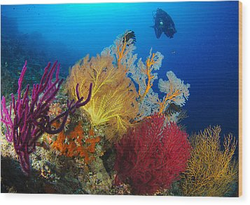 A Diver Looks On At A Colorful Reef Wood Print by Steve Jones