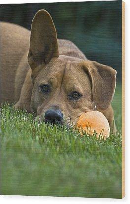A Dog's Life Wood Print