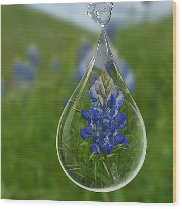 A Drop Of Texas Blue Wood Print by ARTography by Pamela Smale Williams
