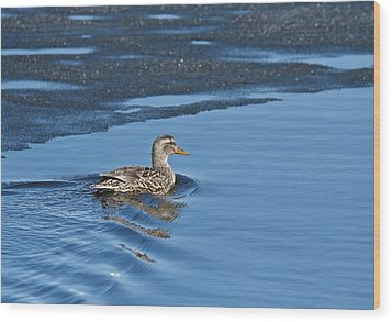 Wood Print featuring the photograph A Female Mallard In Thunder Bay by Michael Peychich