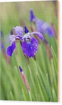 A Field Of Iris Wood Print
