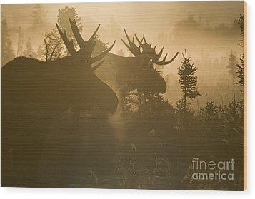 A Foggy Morning Wood Print by Tim Grams