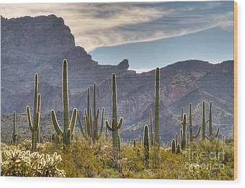 A Forest Of Saguaro Cacti Wood Print